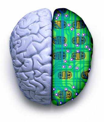 brain production